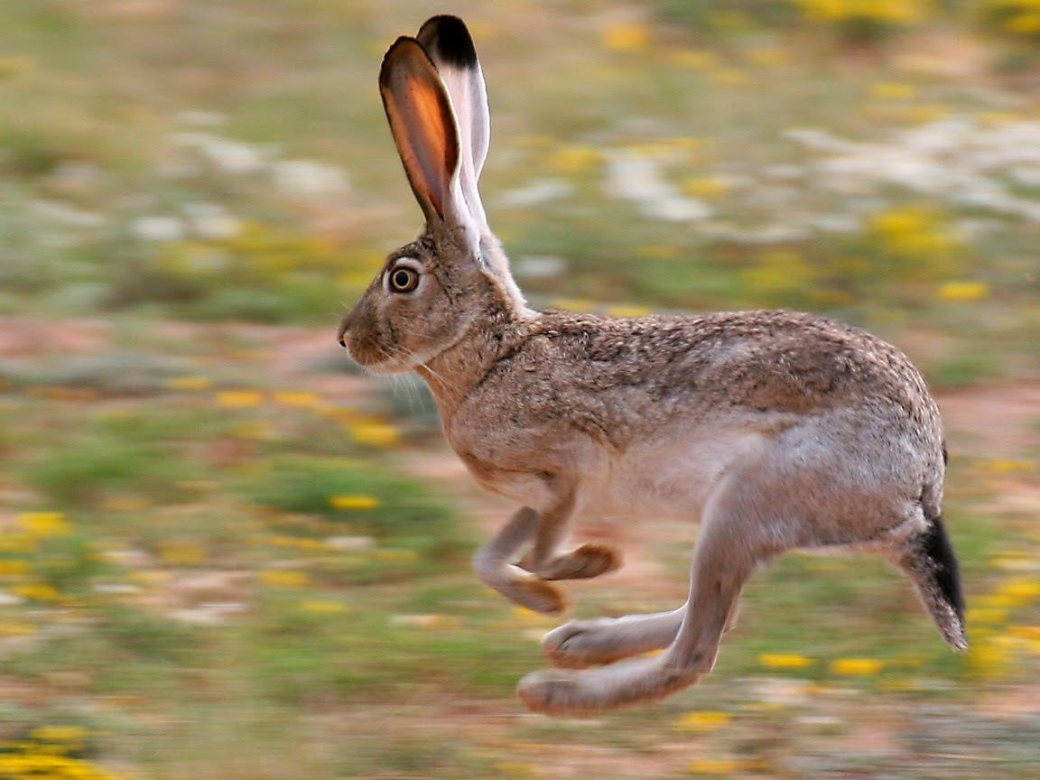 See What's Hopping Over Easter