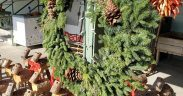 Noble Firs Still Top the Christmas Tree List