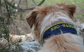 Accessorize Your Pooch for Safety