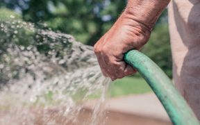 man watering with soaker hose