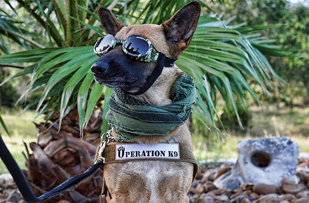K9 therapy dog